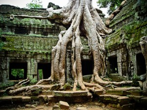 tree-growing-over-temple-angkor-cambodia